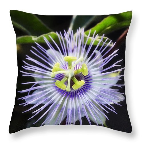 Passion Flower Throw Pillow featuring the photograph A Little Passion by Saija Lehtonen