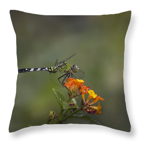 Dragonflies Throw Pillow featuring the mixed media A Littlebit Of Sunshine by Kim Henderson