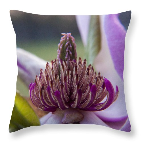 Center Throw Pillow featuring the photograph A Look Inside by Darleen Stry
