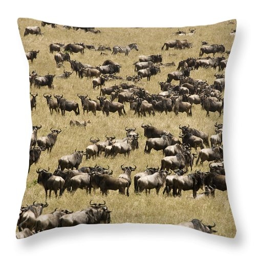 Color Image Throw Pillow featuring the photograph A Migrating Herd Of Wildebeests by Michael Poliza