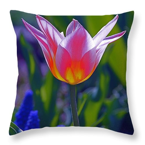 Tulip Throw Pillow featuring the photograph A Moment Of Illumination by Byron Varvarigos