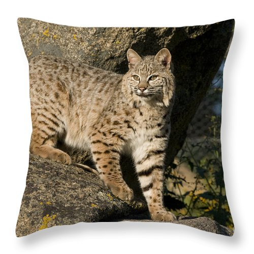 Bronstein Throw Pillow featuring the photograph A Moment Of Observation by Sandra Bronstein