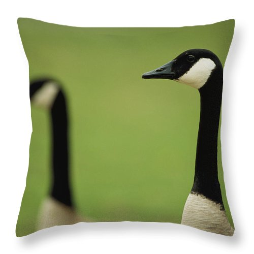 Animals Throw Pillow featuring the photograph A Pair Of Canada Geese In Profile by Joel Sartore