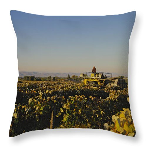 Panoramic Views Throw Pillow featuring the photograph A Panoramic View Of A Vineyard by Kenneth Garrett
