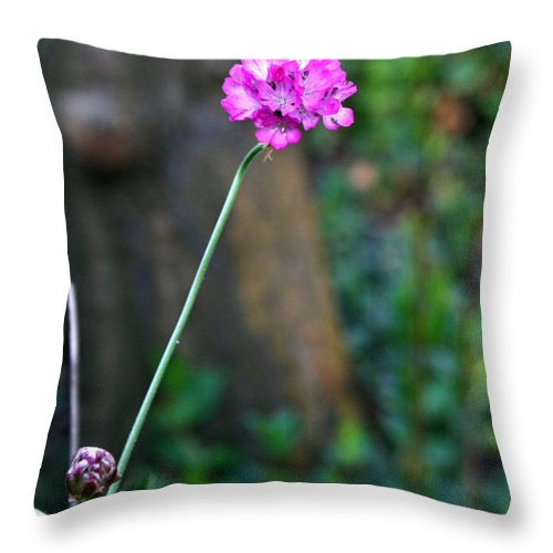 Flower Throw Pillow featuring the photograph A Peaceful Moment by Sally Bauer