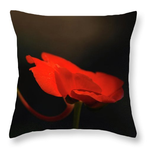 Geranium Throw Pillow featuring the photograph A Pop Of Orange by Lori Tambakis