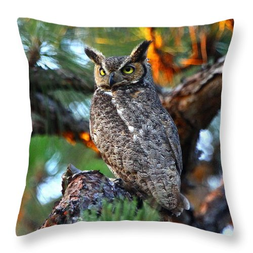 Great Horned Owl Throw Pillow featuring the photograph A Portrait Of A Wise Man by Barbara Bowen
