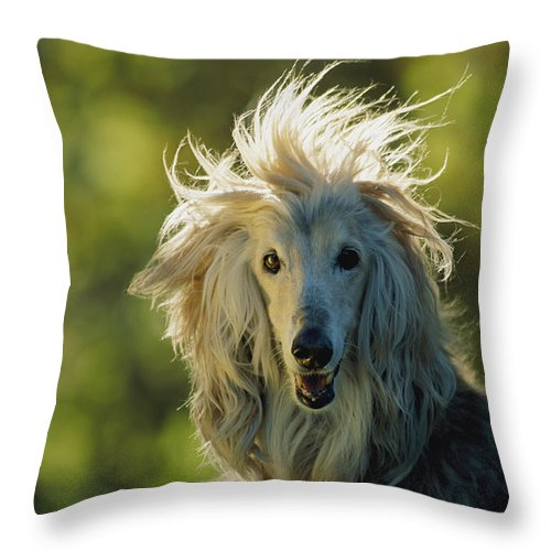 Animals Throw Pillow featuring the photograph A Portrait Of An Afghan Hound by Joel Sartore