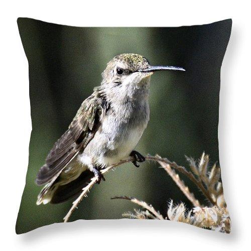 Hummingbird Throw Pillow featuring the photograph A Quick Break by Saija Lehtonen