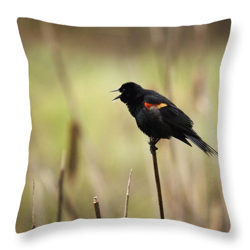 Animals In The Wild Throw Pillow featuring the photograph A Red-winged Blackbird Agelaius by Philippe Widling