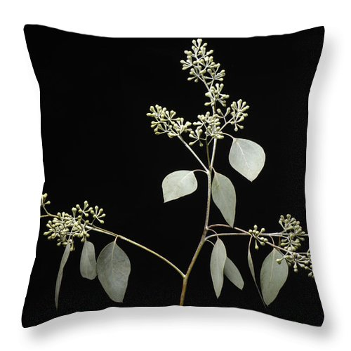 Photography Throw Pillow featuring the photograph A Seeded Eucalyptus Eucalyptus Cinerea by Joel Sartore