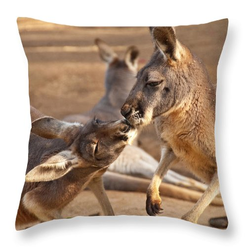 Photograph Throw Pillow featuring the photograph A Show Of Respect by Bob and Nancy Kendrick