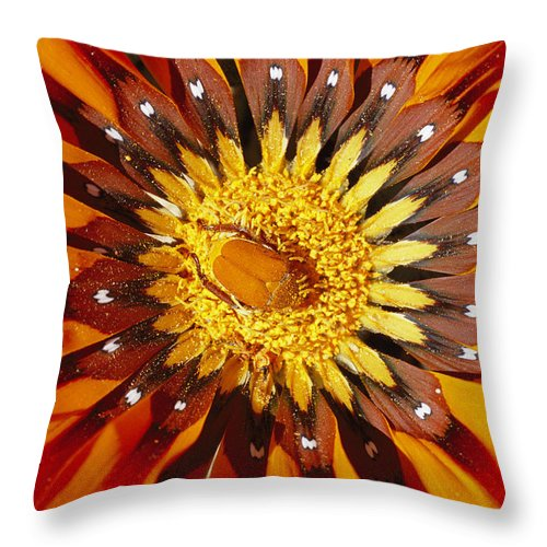 Plants Throw Pillow featuring the photograph A South African Monkey Beetle Burrows by Jonathan Blair