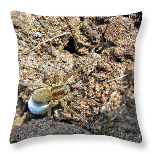 Nature Throw Pillow featuring the photograph A Spider With The Egg Sack Square by Ausra Huntington nee Paulauskaite