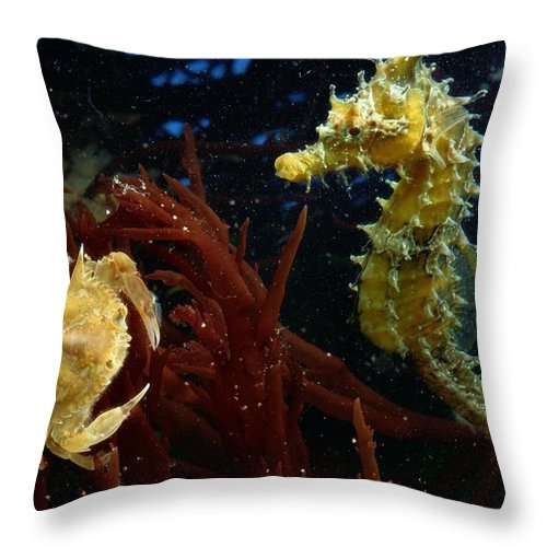Color Image Throw Pillow featuring the photograph A Spotted Young Blue Crab, Callinectes by George Grall