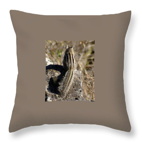 Chipmunks Throw Pillow featuring the photograph A Tail Untold by Ben Upham III