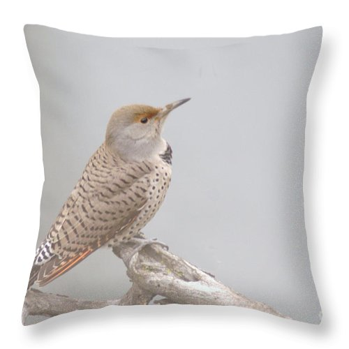 Birds Throw Pillow featuring the photograph A Thrush Posing by Jeff Swan