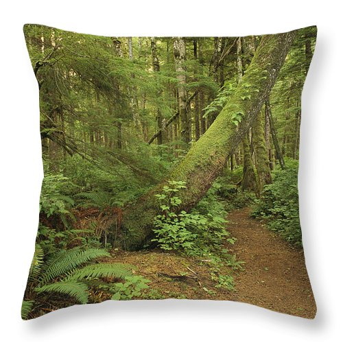North America Throw Pillow featuring the photograph A Trail Cuts Through Ferns And Shrubs by James A. Sugar