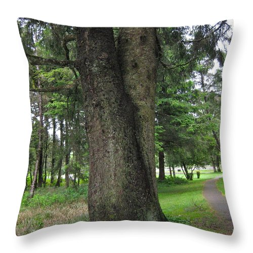 Trees Throw Pillow featuring the photograph A Tree Divided by Linda Hutchins
