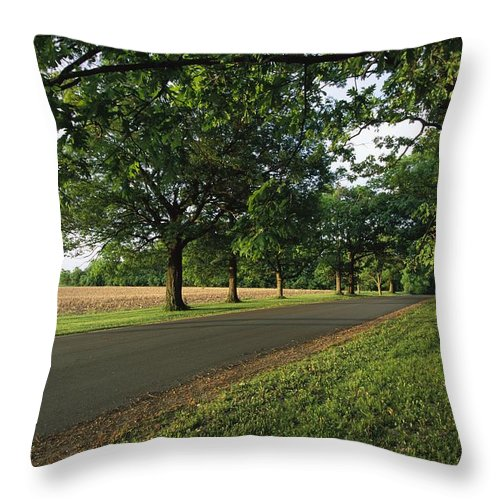 North America Throw Pillow featuring the photograph A Tree-lined Rural Virginia Road by Medford Taylor