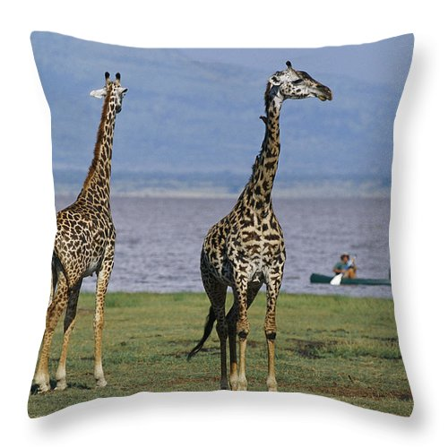 Africa Throw Pillow featuring the photograph A Trio Of Giraffes Near The Edge by Richard Nowitz