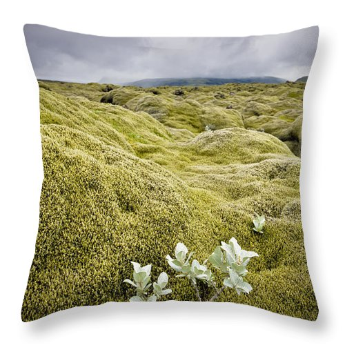 Color Image Throw Pillow featuring the photograph A White Wildflower Growing On A Rugged by David DuChemin
