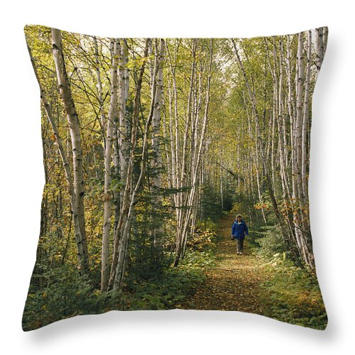 North America Throw Pillow featuring the photograph A Woman Walks Down A Birch Tree-lined by George F. Mobley