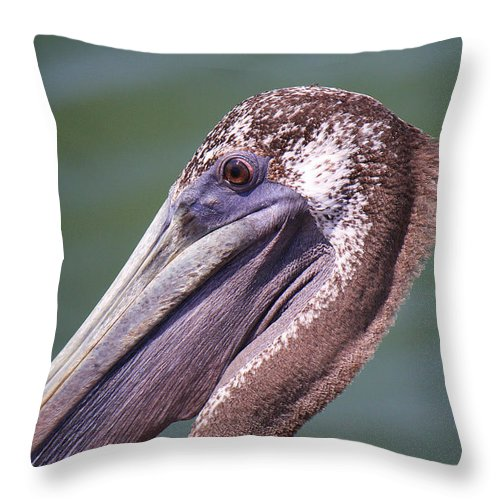 Roena King Throw Pillow featuring the photograph A Young Brown Pelican by Roena King