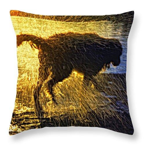 Dog Throw Pillow featuring the photograph Aargh by Steve Harrington