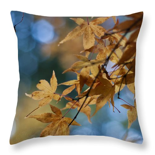 Acer Throw Pillow featuring the photograph Acer Autumn by Mike Reid