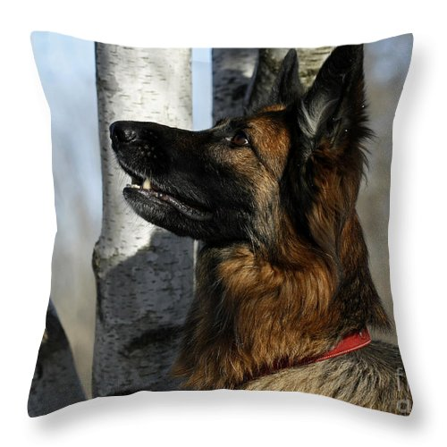 Admiration Throw Pillow featuring the photograph Admiration by Inspired Nature Photography Fine Art Photography