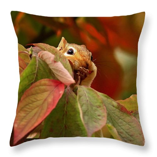 Adorable Chipmunk Hiding In Autumn Leaves Throw Pillow featuring the photograph Adorable Chipmunk Hiding In Autumn Leaves by Inspired Nature Photography Fine Art Photography
