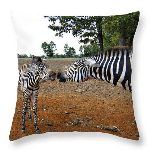Zebras Throw Pillow featuring the photograph Affectionate Mother by Douglas Barnard