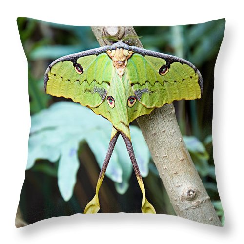 Antenna Throw Pillow featuring the photograph African Moon Moth 1 by Andee Design