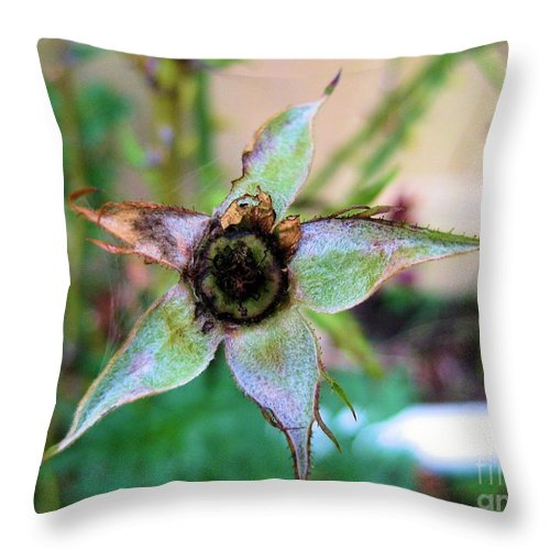 Star Throw Pillow featuring the photograph After The Petals Fall The Star by Judy Via-Wolff