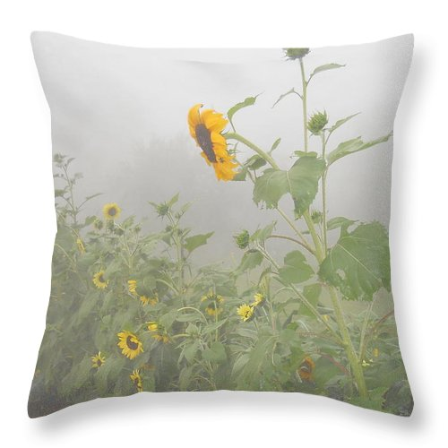 Sunflower Throw Pillow featuring the photograph Against The Wind by Diannah Lynch