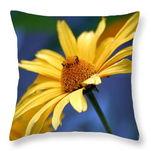 Floral Throw Pillow featuring the photograph Aging Beauty by Living Color Photography Lorraine Lynch