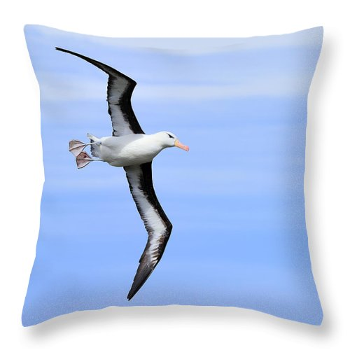 Black-browed Albatross Throw Pillow featuring the photograph Air Breaks by Tony Beck
