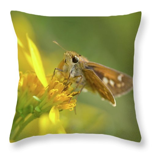 Skipper Throw Pillow featuring the photograph Alighted Skipper by JD Grimes