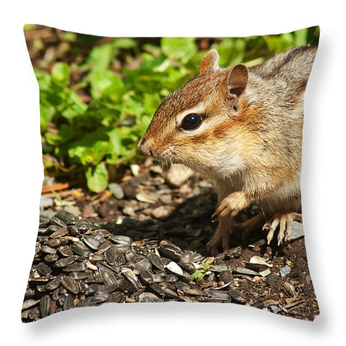 Chipmunk Throw Pillow featuring the photograph All For Me by Jeff Galbraith