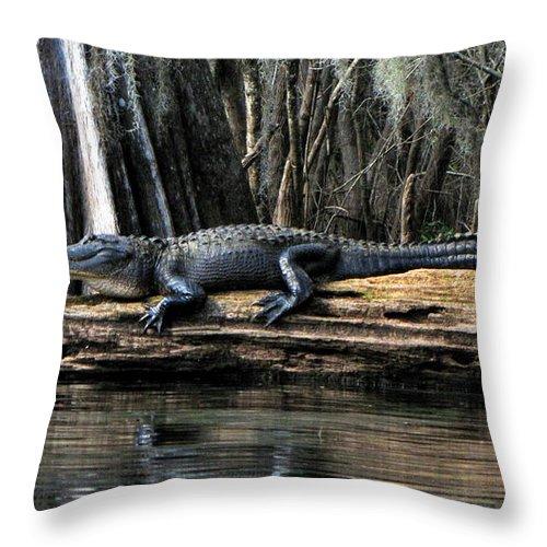 American Alligator Throw Pillow featuring the photograph Alligator Sunning by Barbara Bowen