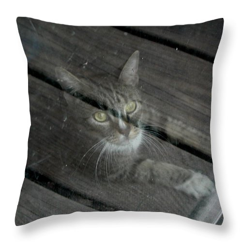 Cat Throw Pillow featuring the photograph Almost by Barry Doherty