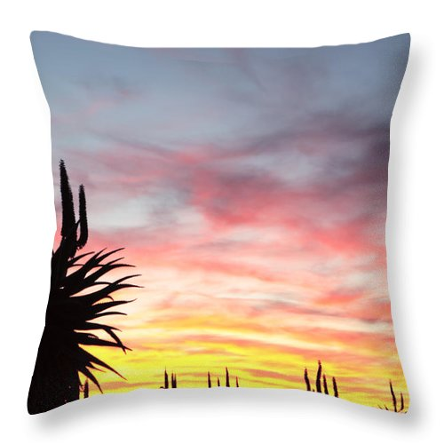 Aloe Feros Throw Pillow featuring the photograph Aloe Ferox South Africa by Neil Overy
