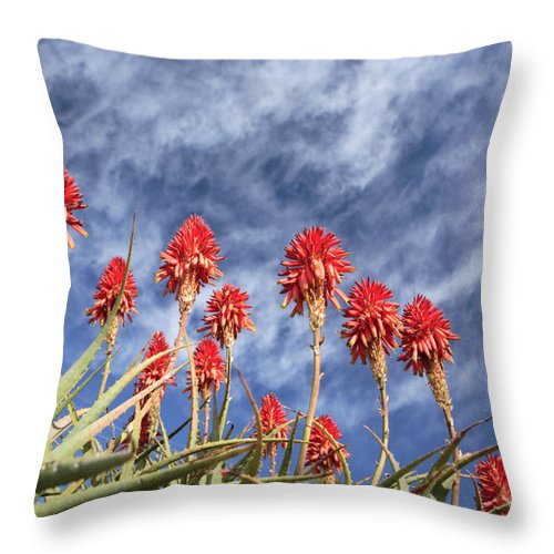 Krans Aloe Throw Pillow featuring the photograph Aloes South Africa by Neil Overy