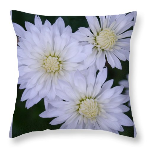 Always A Bridesmaid Throw Pillow featuring the photograph Always A Bridesmaid by Barbara S Nickerson