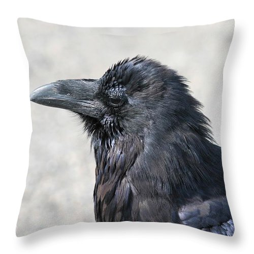 Crow Throw Pillow featuring the photograph Am I Good Looking Or What by David Dunham