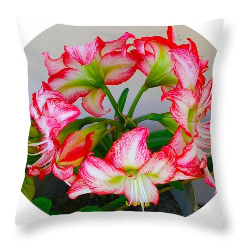 Amaryillis Throw Pillow featuring the painting Amaryillis Flower Ring by Allan Hughes