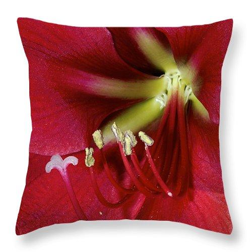 Amaryllis Throw Pillow featuring the photograph Amaryllis Flower by Phyllis Denton