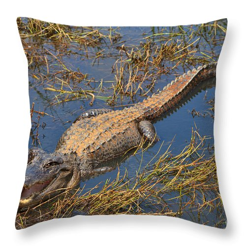 American Throw Pillow featuring the photograph American Alligator by Louise Heusinkveld