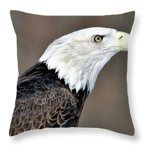 Bald Eagle Throw Pillow featuring the photograph American Bald Eagle by Ronald Grogan